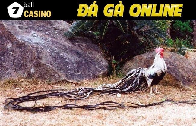 Hình ảnh chú gà đuôi dài biểu tượng đất nước Mặt Trời Mọc